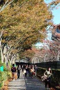 f:id:fuwakudejokyo:20121119014030j:image