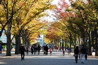 f:id:fuwakudejokyo:20121119014203j:image