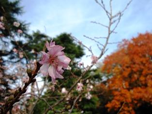 f:id:fuwakudejokyo:20170204093626j:image