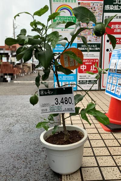 f:id:fuwari-x:20201111112709p:plain