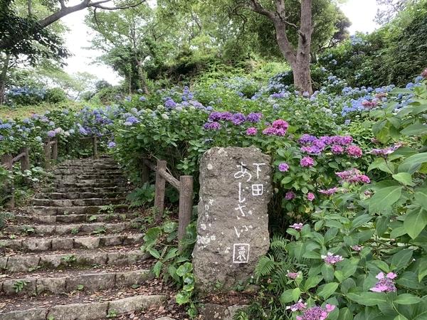 f:id:fuwari-x:20210623151552j:plain