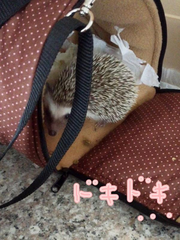 f:id:fuwari010:20150616195756j:plain