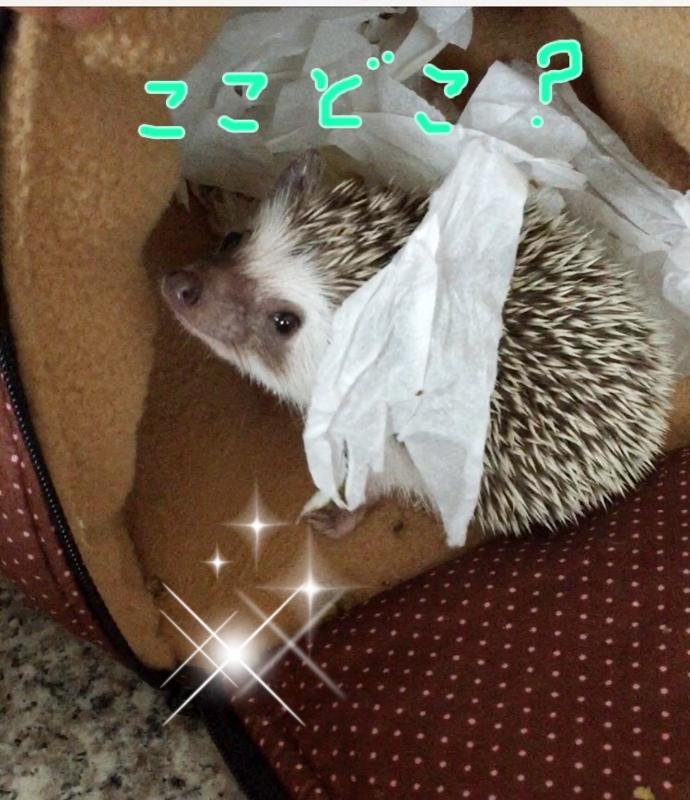 f:id:fuwari010:20150616195822j:plain
