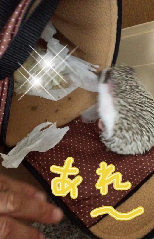 f:id:fuwari010:20150616200000j:plain