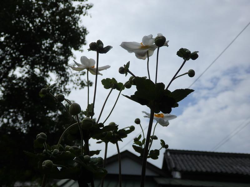 f:id:fuwarizakkuri:20180915094249j:image:w640