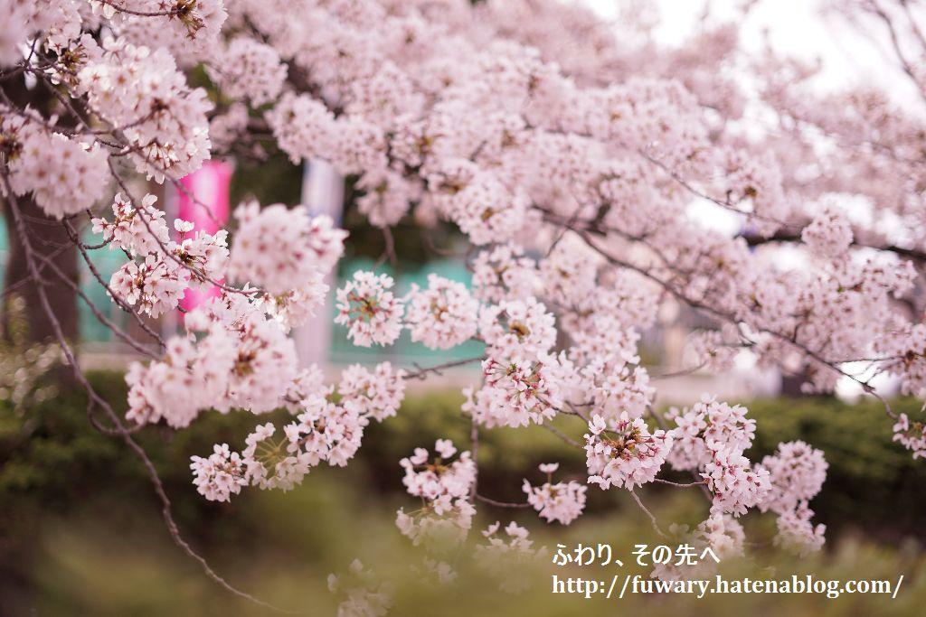 f:id:fuwary:20170407143304j:plain