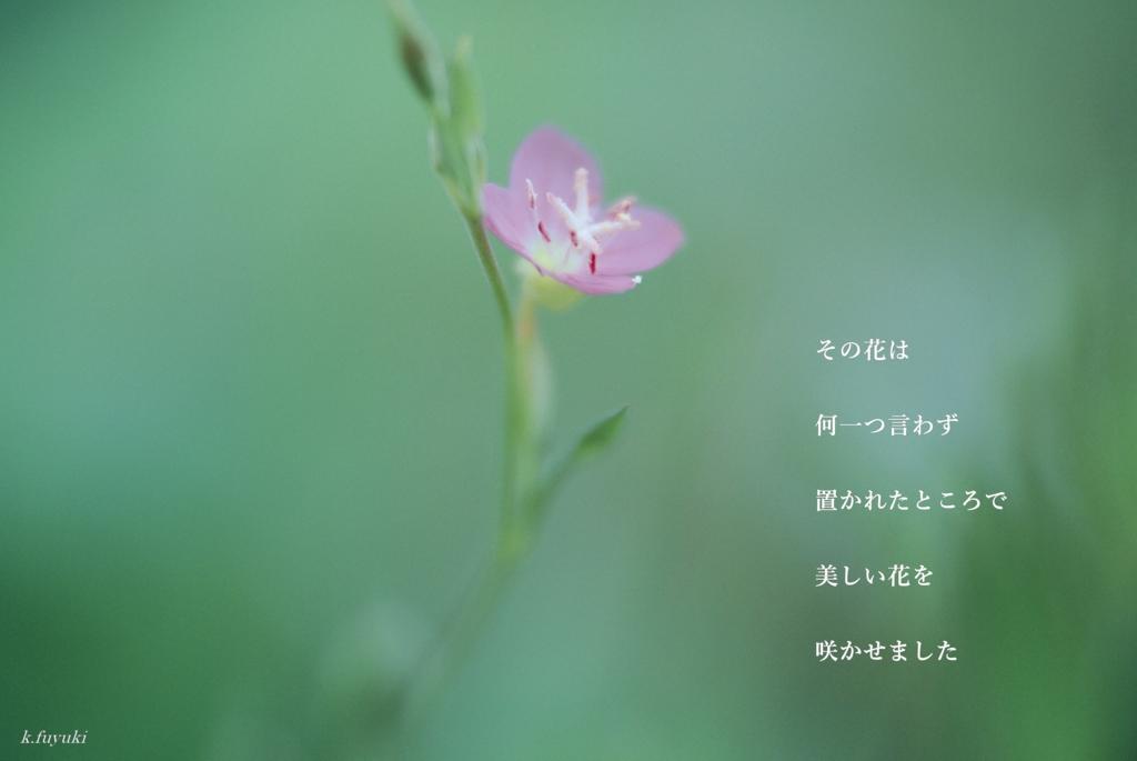 f:id:fuyuki44:20170316222139j:plain
