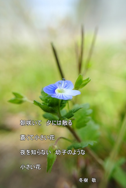 f:id:fuyuki44:20170410003253j:plain