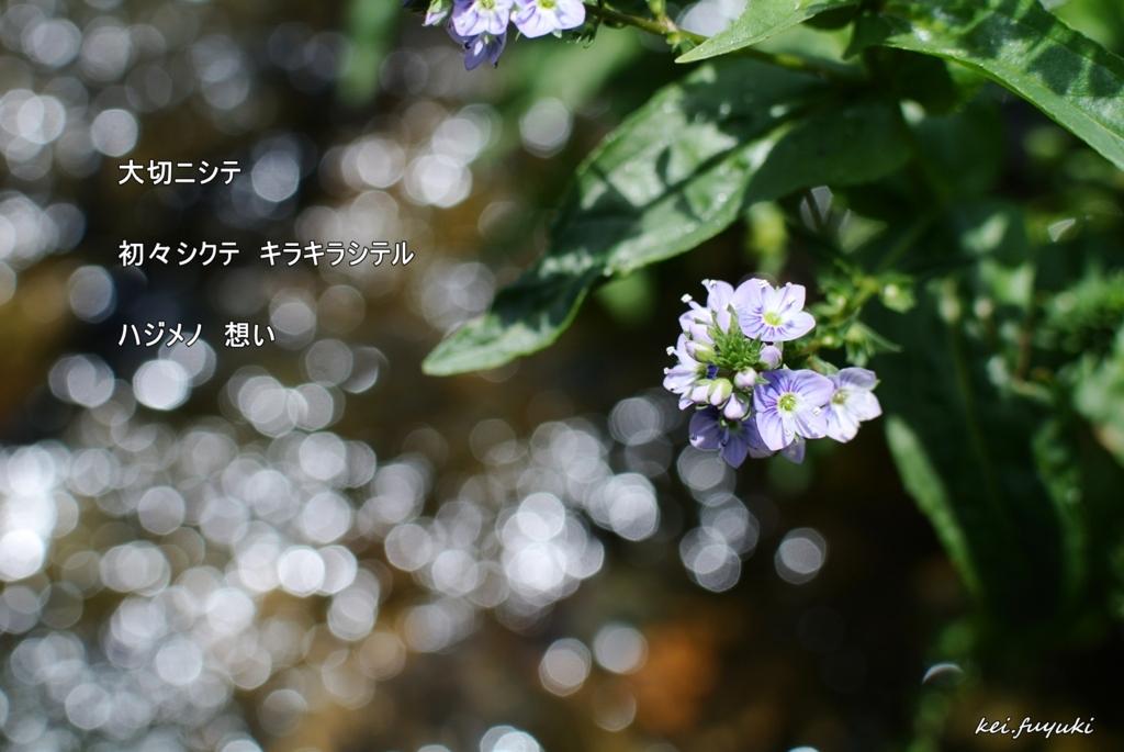 f:id:fuyuki44:20170505184954j:plain