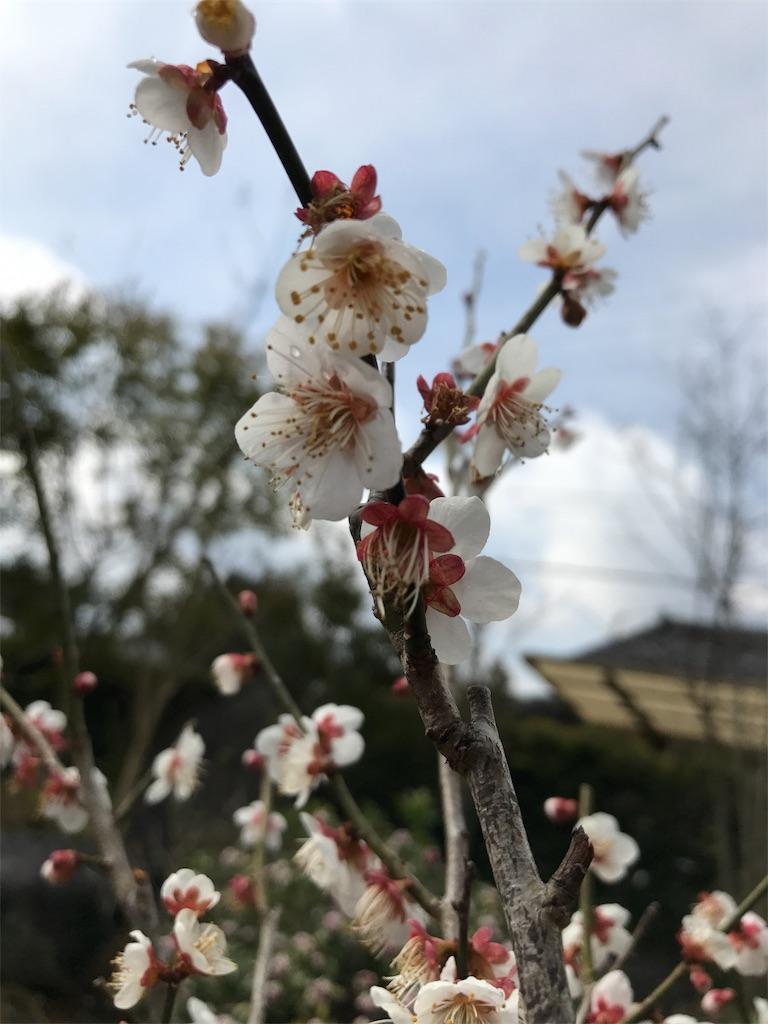f:id:fuyuyuzuiro:20170309081359j:image
