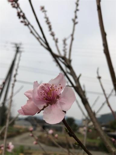 f:id:fuyuyuzuiro:20170324095842j:image