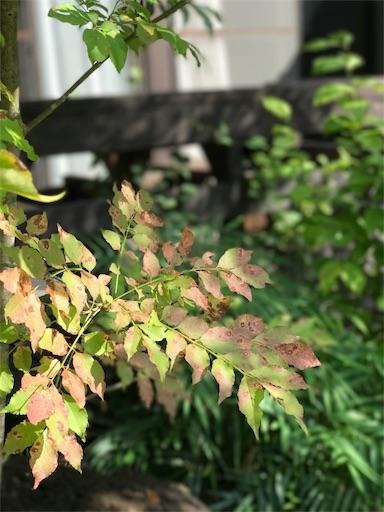 f:id:fuyuyuzuiro:20170918094340j:image