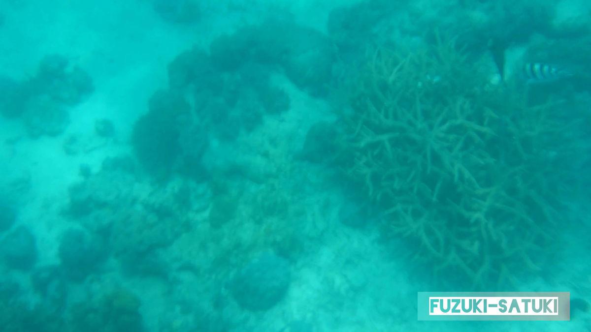 水深は5M以上ありそうです の写真