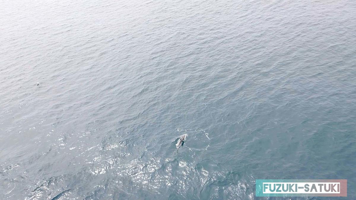 海を観ると、イルカを見かけた写真