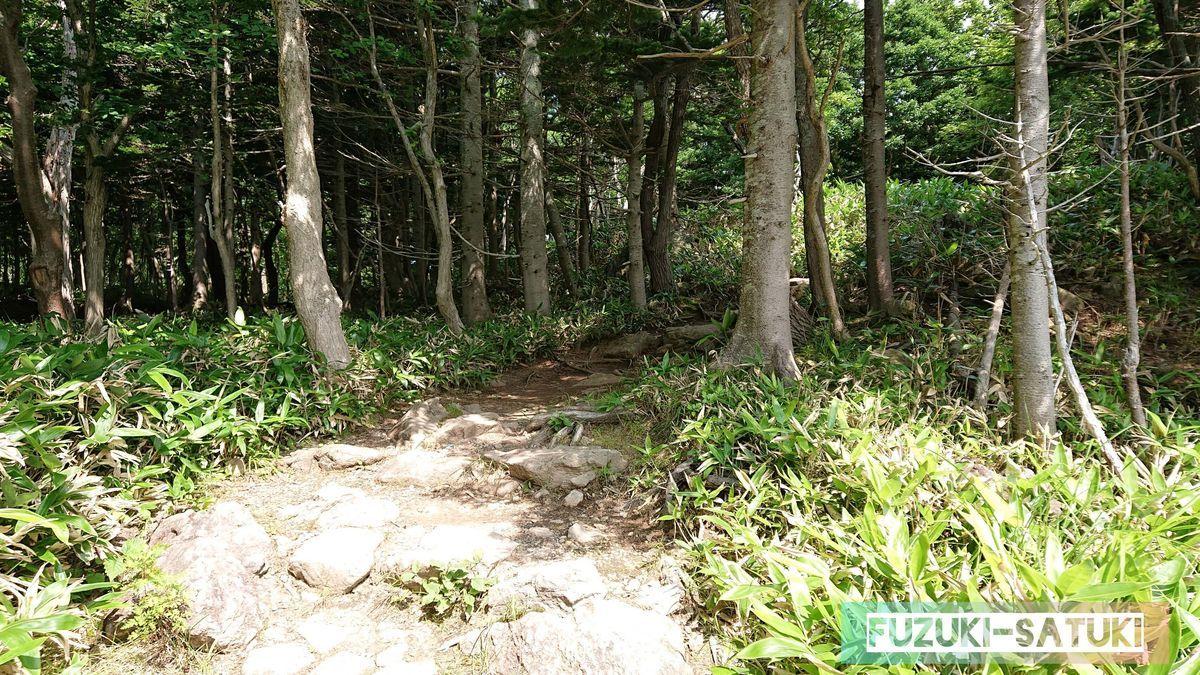 足元の悪い森の道