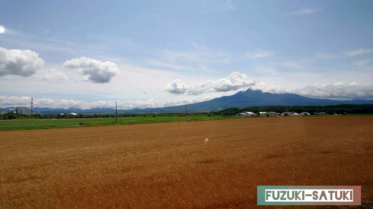広大な土地とコガネイロで染まる麦畑