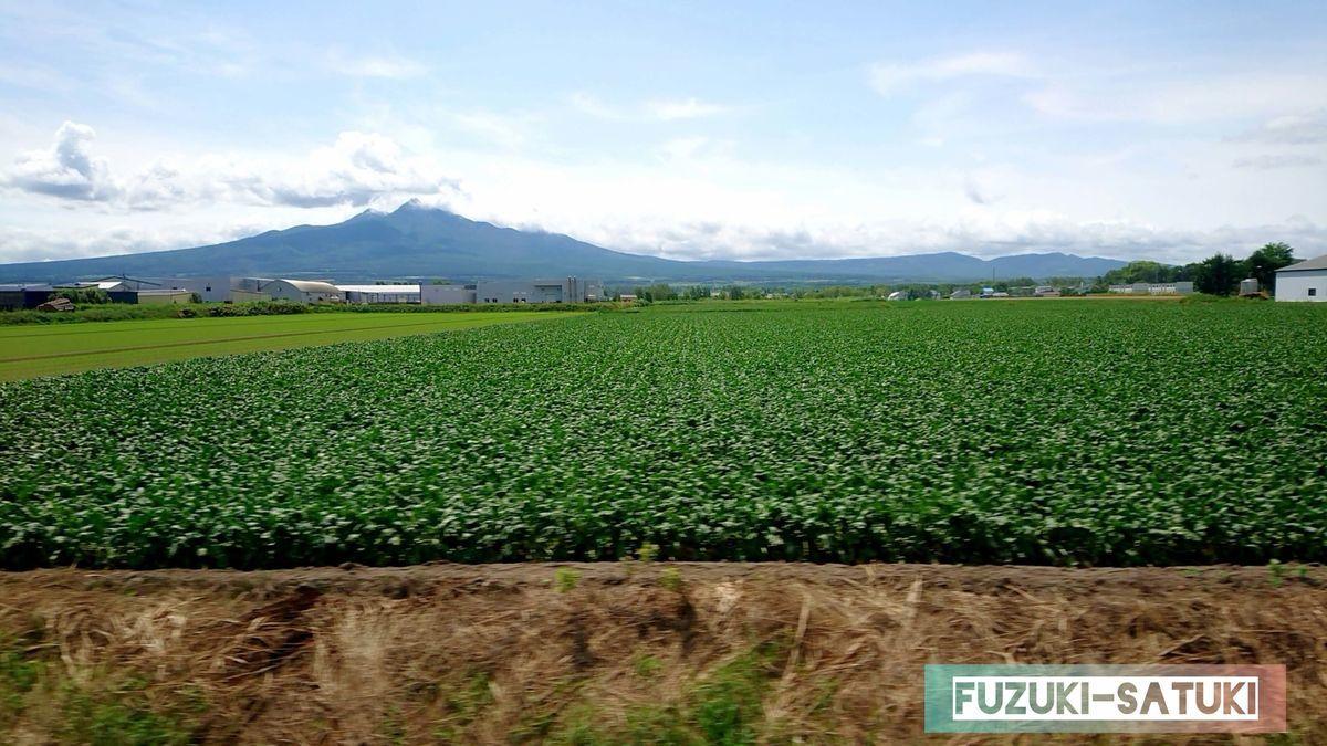 青々と生い茂る農作物