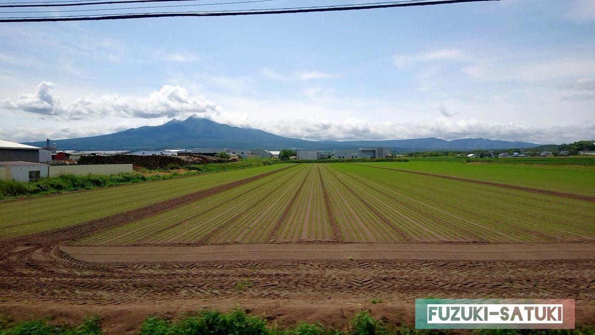 新芽の緑鮮やかに、広々とした土地の茶色とのコントラスト