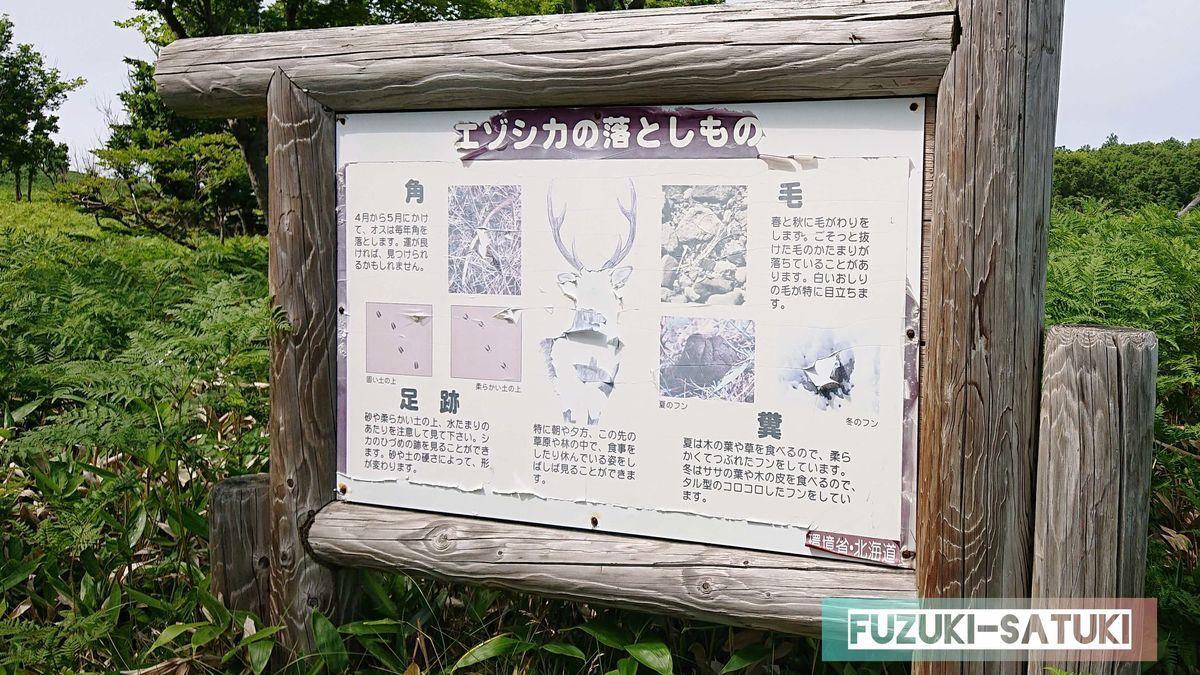 エゾシカの落としもの 角、足跡、毛、糞などがある看板