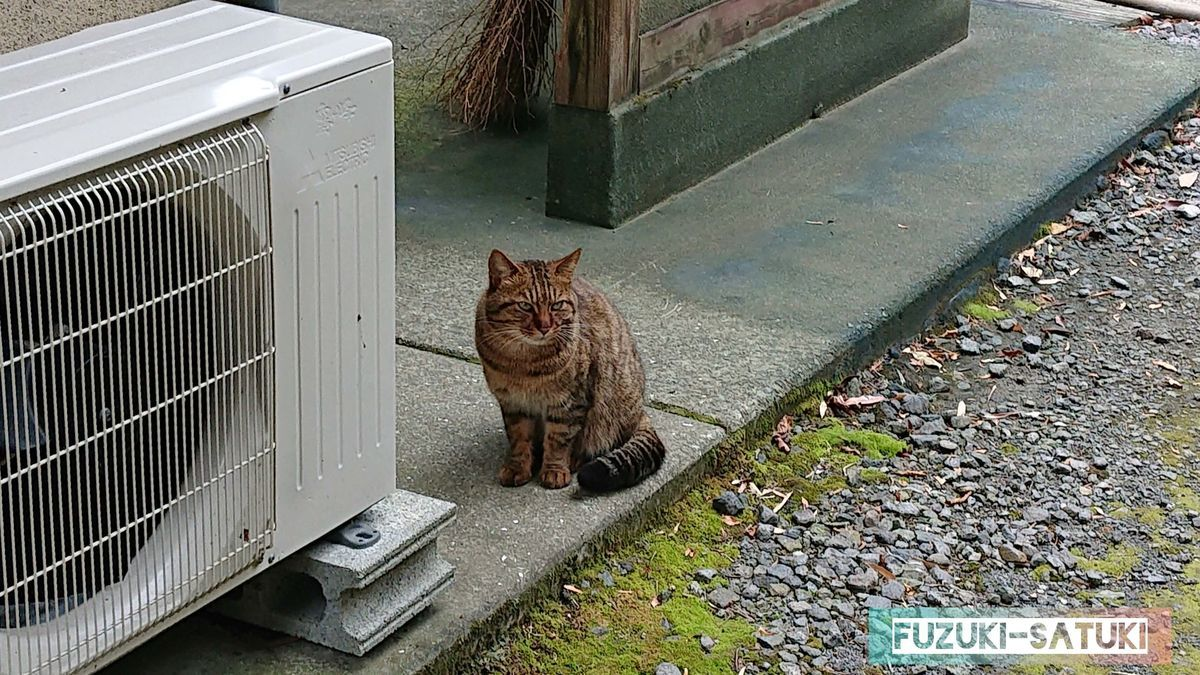 敷地内にいた猫 温泉街には猫をよく見かける気がする