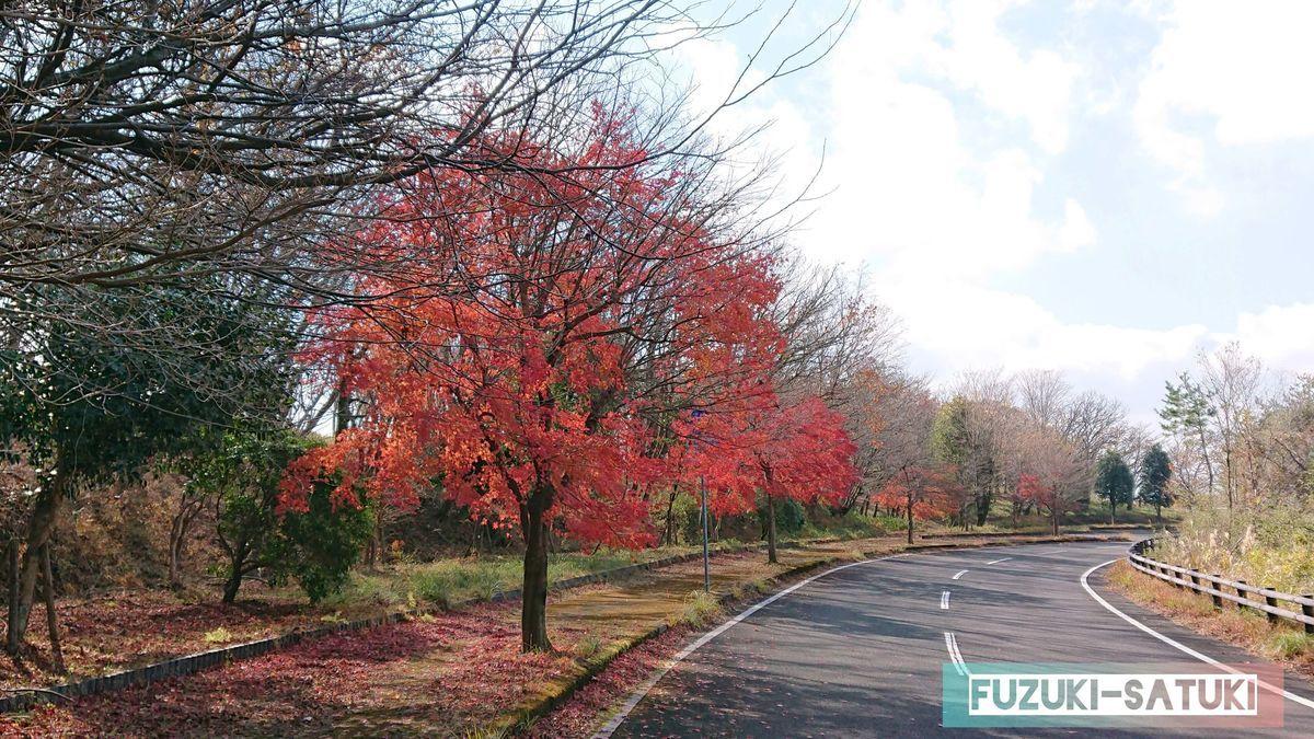 栗野岳温泉近くの道路にて 秋と冬が入り混じったような景色
