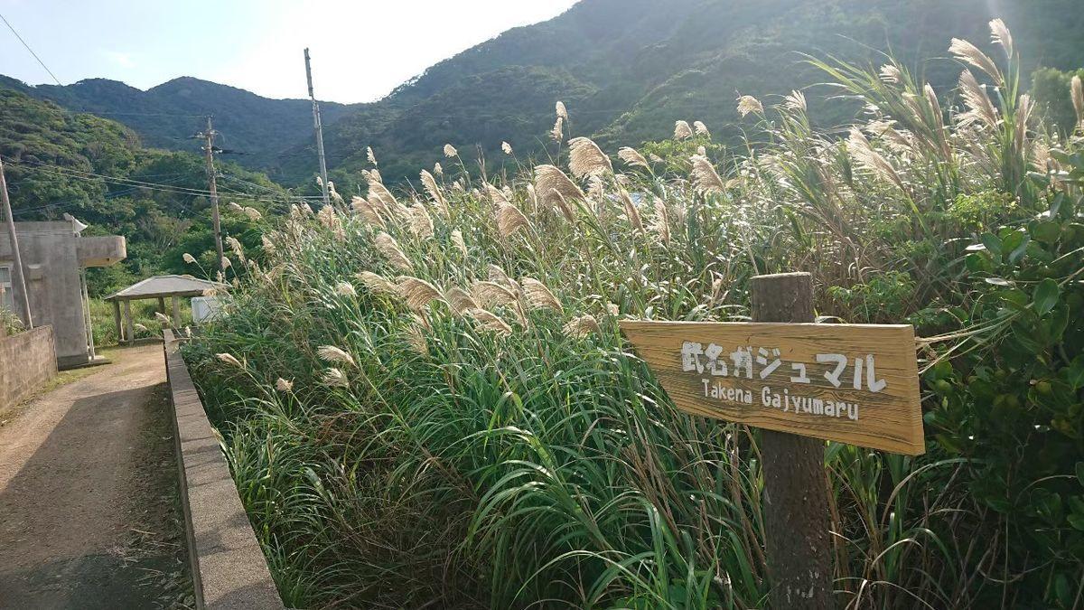 f:id:fuzuki-satuki:20210306204340j:plain