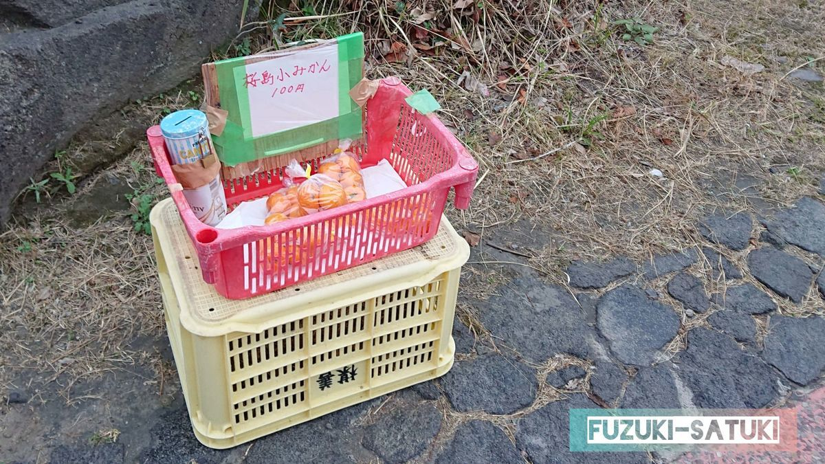 「桜島」なぎさ公園足湯の敷地内にて、100円で「桜島小みかん」が無人販売されている。小ぶりながら甘くて美味しい。