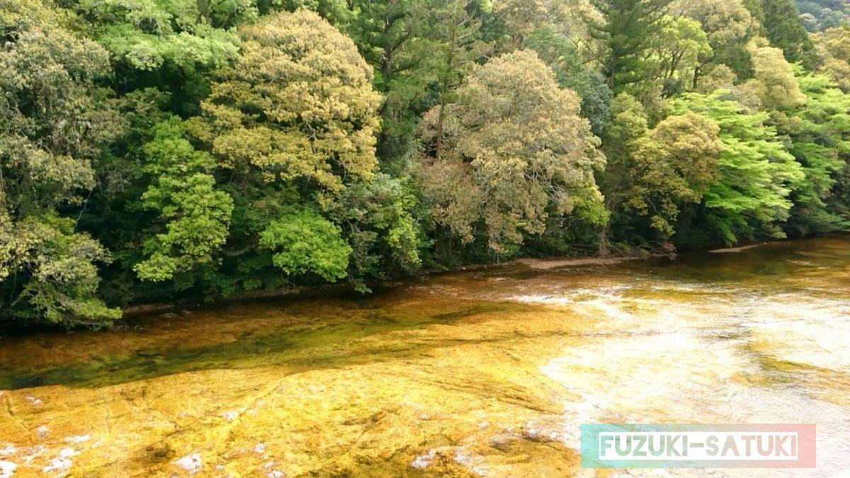 湯谷温泉の渓谷を流れる黄金の川『板敷川』。見る角度なのだろうか、浮石橋から見たそれは緑がかった青い色だったが…。