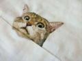 ネコ刺繍3