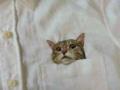 ネコ刺繍1s
