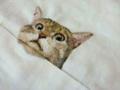 ネコ刺繍3s