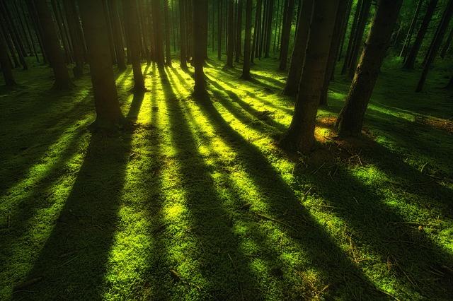 森 夜明け
