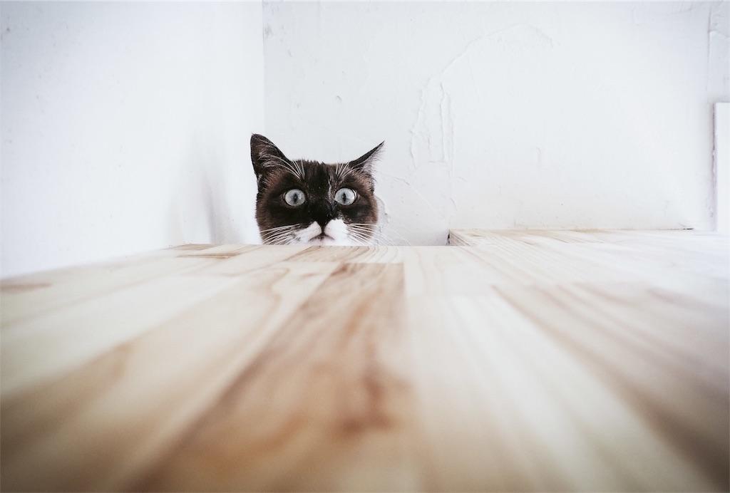 穴から覗いているネコ