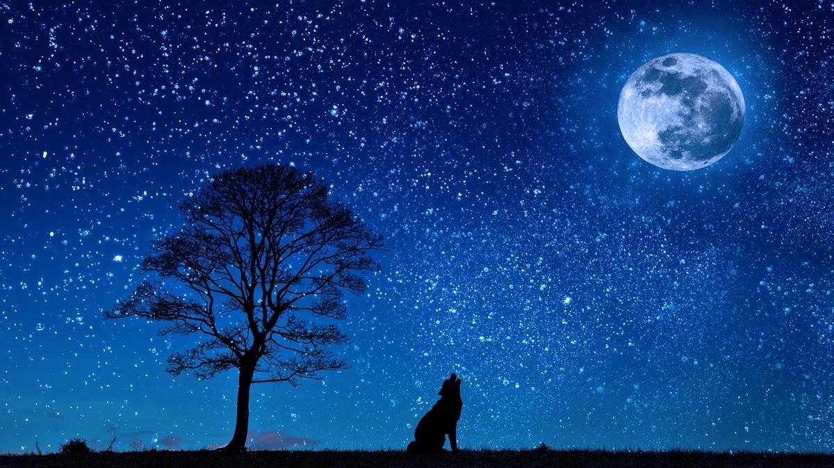 夜空と月と犬