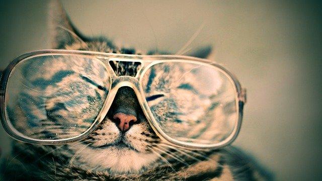 眼鏡をかけたネコ