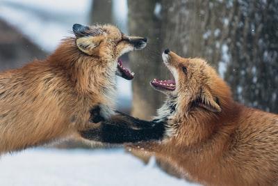 喧嘩している犬