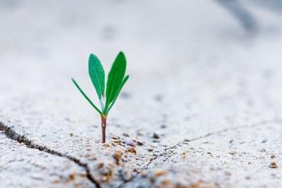 成長する葉