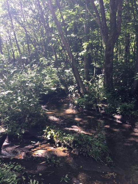 七時雨山の森の中