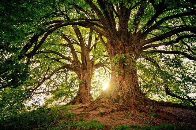 明るい綺麗な森