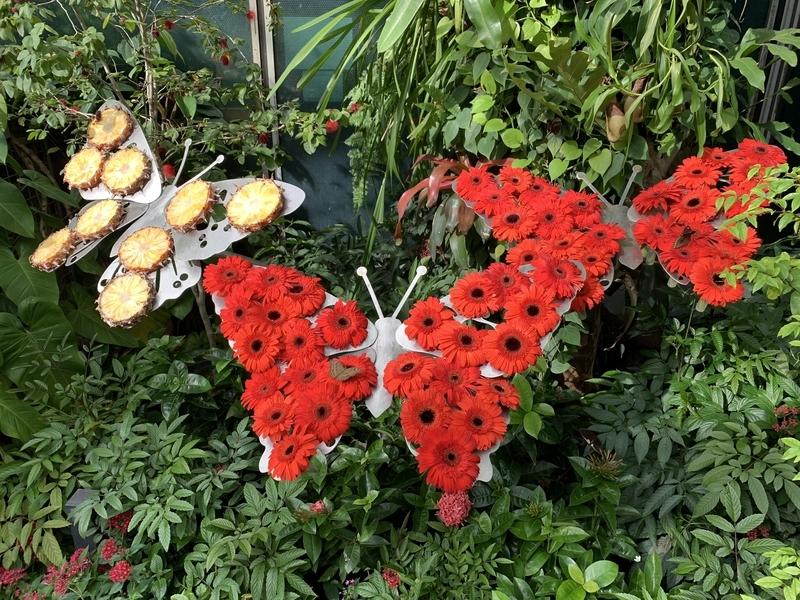 バタフライガーデンの蝶餌