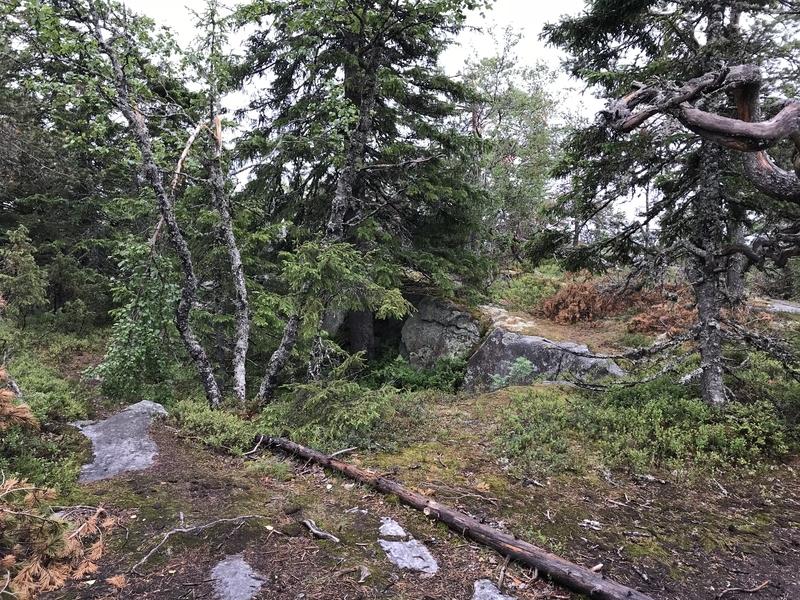 コリ国立公園険しい地形(森)