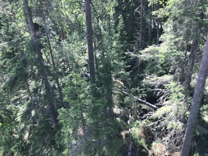 コリ国立公園リフトから見た森