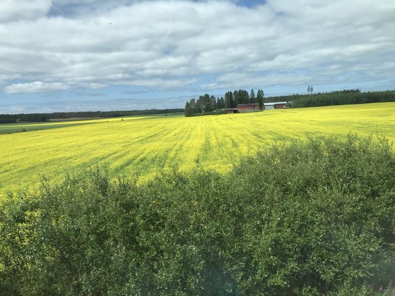 フィンランドの車窓(花畑)
