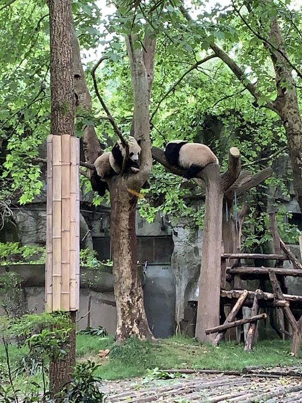 未成年パンダ1