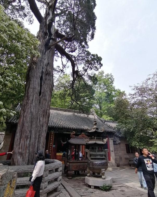 f:id:gacho_shanghai:20210506184633j:plain
