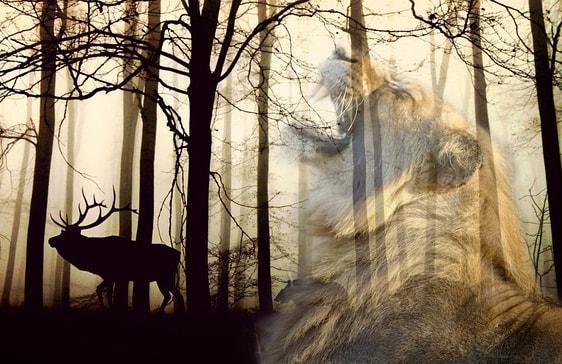 どうぶつの森ポケットキャンプのイメージ01