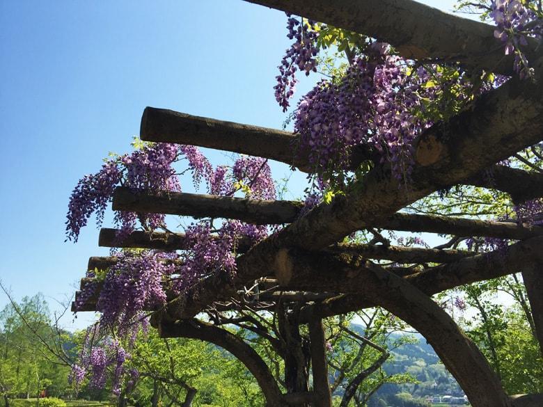 紫水ケ丘公園のイメージ10