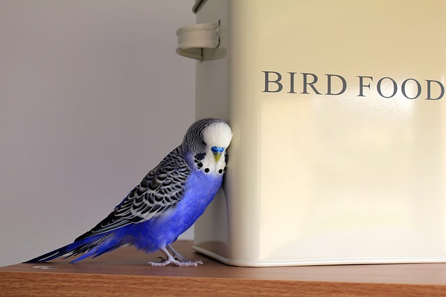 Chirp for Twitterのイメージ01