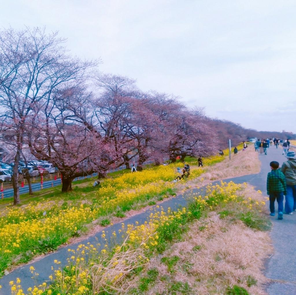 熊谷桜堤 2018年3月24日の様子