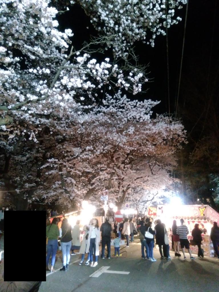 熊谷桜堤 さくら祭り 夜桜2
